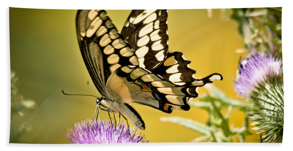 Hand Towel featuring the photograph Giant Swallowtail On Thistle by Cheryl Baxter