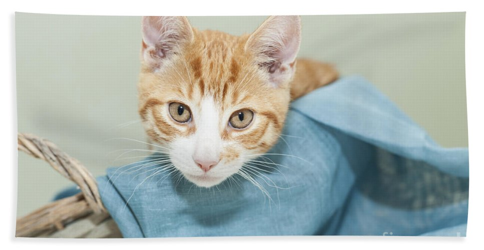 Kitten Bath Sheet featuring the photograph Ginger Kitten In A Basket by Sophie McAulay