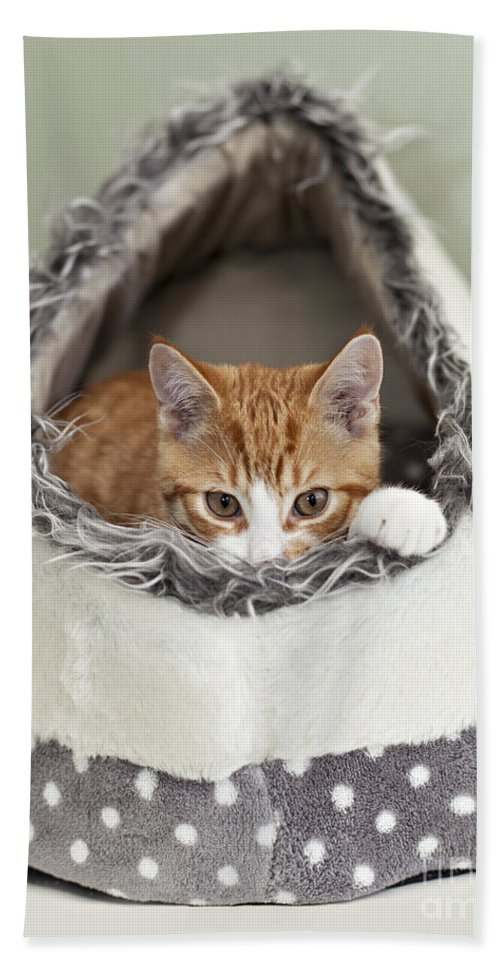 Kitten Bath Sheet featuring the photograph Ginger Kitten In An Igloo by Sophie McAulay