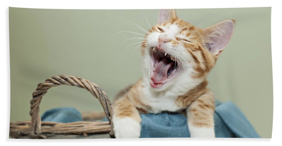 Kitten Bath Sheet featuring the photograph Ginger Kitten Yawning by Sophie McAulay