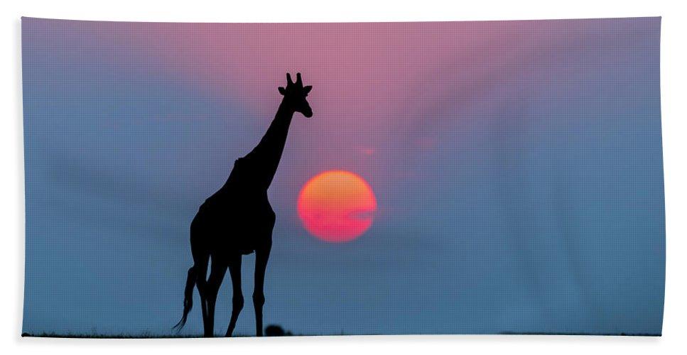 Nis Bath Towel featuring the photograph Giraffe At Sunset Chobe Np Botswana by Andrew Schoeman