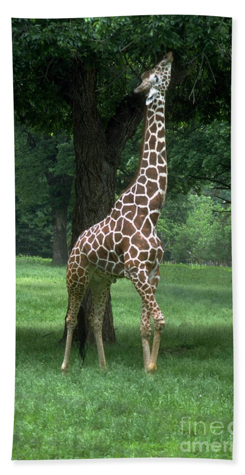 Giraffe Bath Sheet featuring the photograph Giraffe by Gary Gingrich Galleries