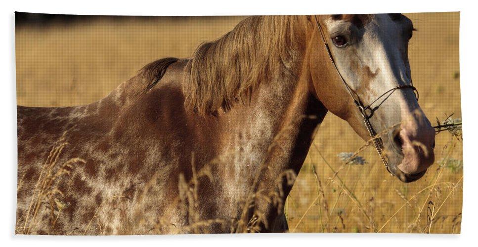 Giraffe Horse Hand Towel featuring the photograph Giraffe Horse by Wes and Dotty Weber