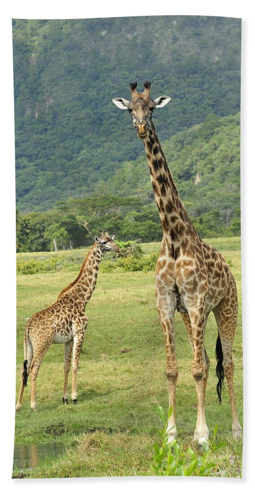 Thomas Marent Bath Towel featuring the photograph Giraffe Mother And Calftanzania by Thomas Marent