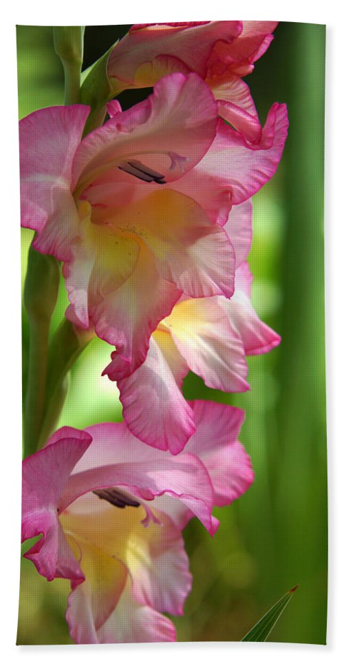 The Gladiolus Hand Towel featuring the photograph Glad Beauty by Kim Pate