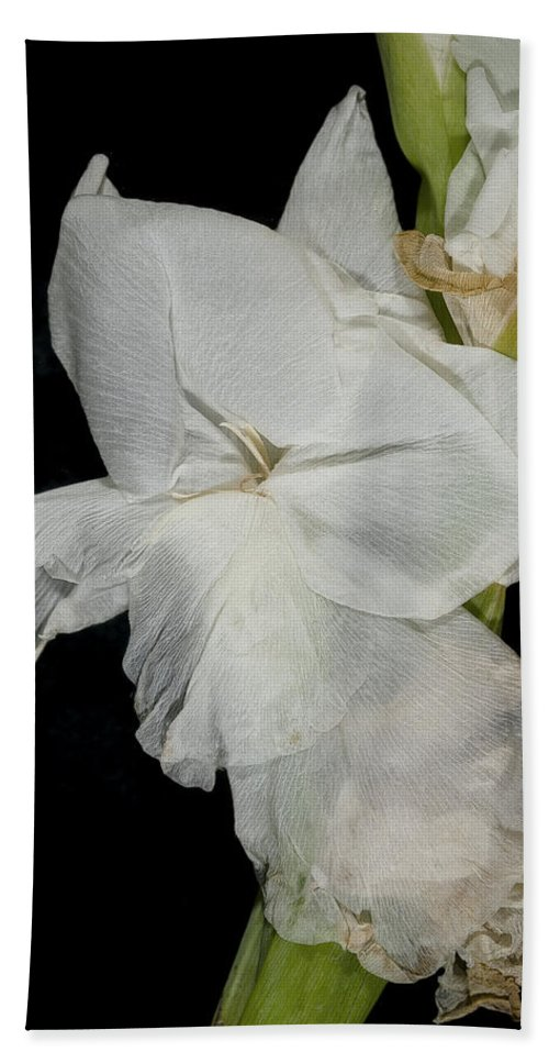 Flower Bath Sheet featuring the photograph Gladiolus Past Time by David Stone