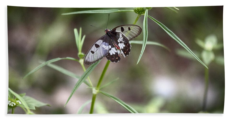 Glass-wing Butterfly Bath Sheet featuring the photograph Glass-wing Butterfly by Douglas Barnard