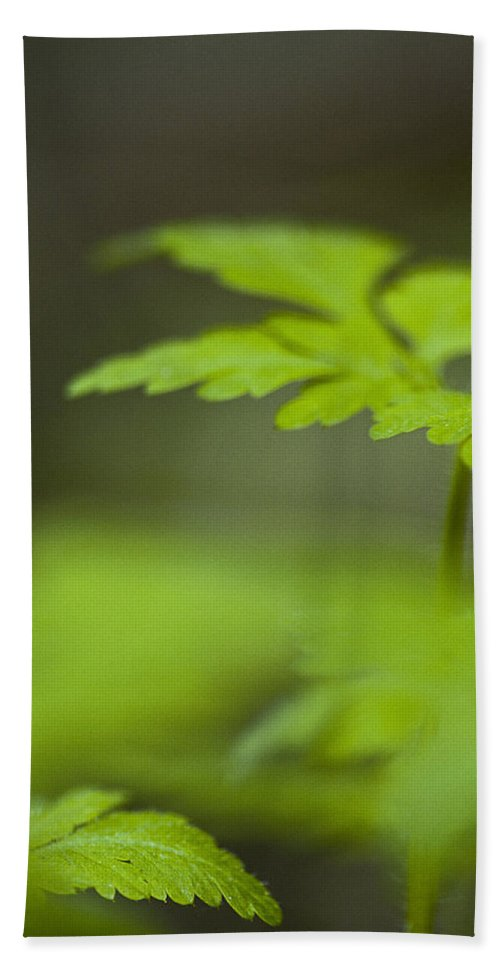 Plants Hand Towel featuring the photograph Glenfern by Walter Murdock