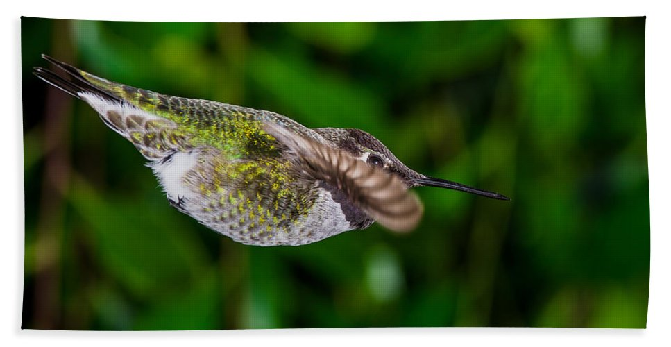 Hummingbird Hand Towel featuring the photograph Gliding Hummingbird by Greg Nyquist
