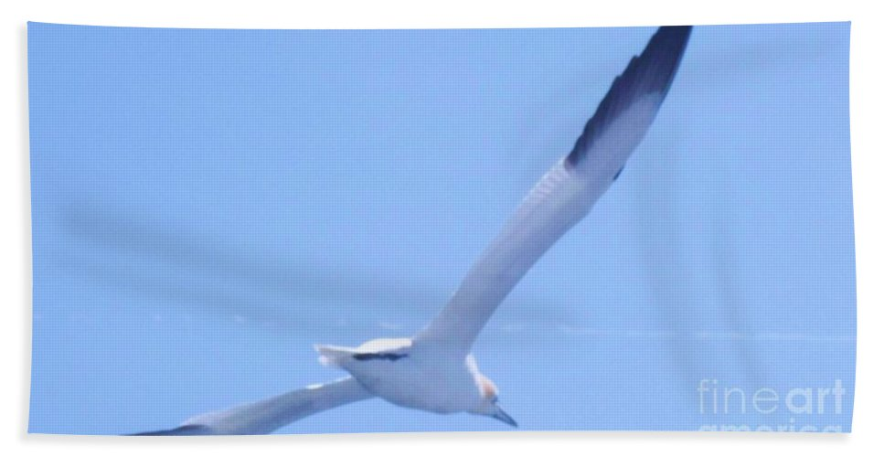 Birds Hand Towel featuring the photograph Gliding On The Wind by Eric Schiabor