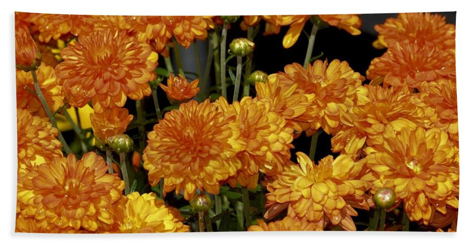 Glorious Golden Mums Hand Towel featuring the photograph Glorious Golden Mums by Maria Urso
