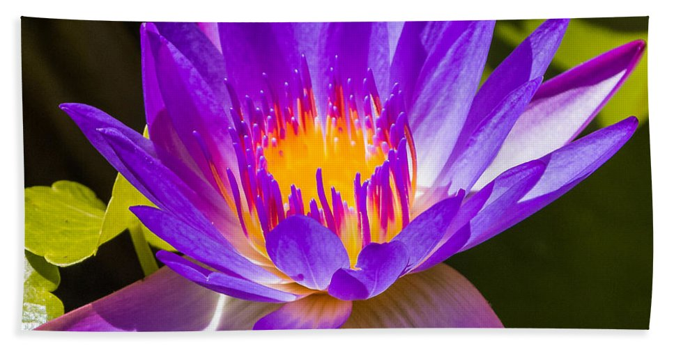 Flower Bath Sheet featuring the photograph Glowing From Within by Jane Luxton
