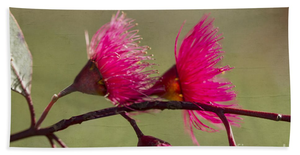 Eucalyptus Bath Sheet featuring the photograph Glowing In The Afternoon Sun by Linda Lees
