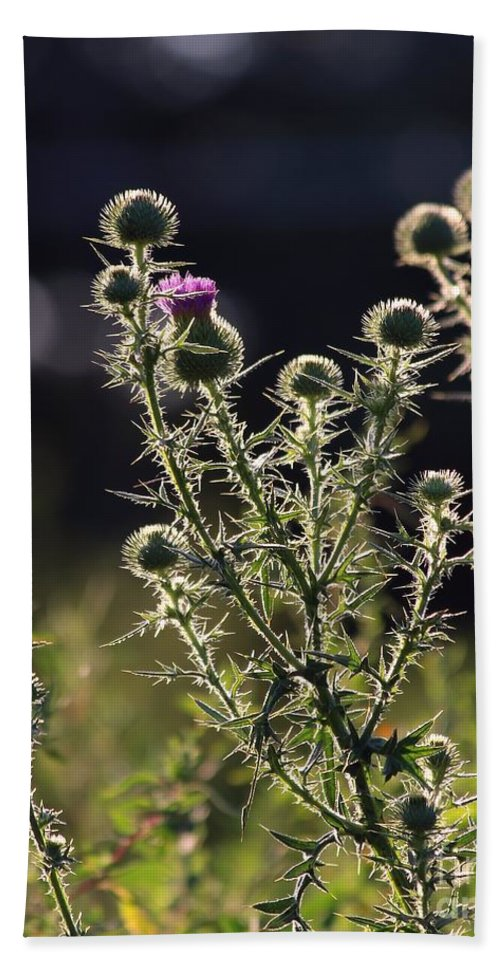 Thistle Hand Towel featuring the photograph Glowing Thistle - 1 by Kenny Glotfelty