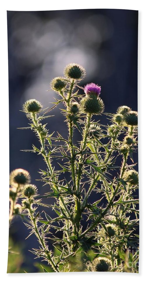 Thistle Hand Towel featuring the photograph Glowing Thistle - 3 by Kenny Glotfelty