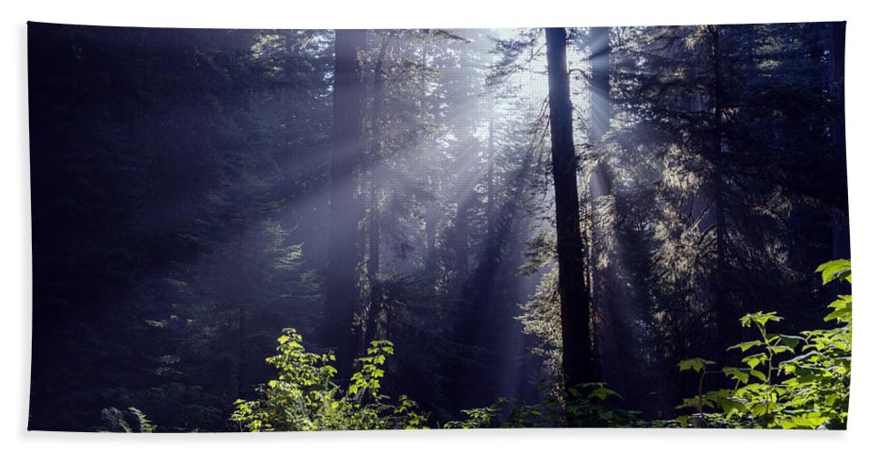 God Rays Bath Sheet featuring the photograph God Rays Through The Fog by Vishwanath Bhat