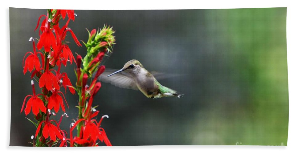 Ruby Throated Hummingbird Hand Towel featuring the photograph Going In For Seconds by Judy Wolinsky