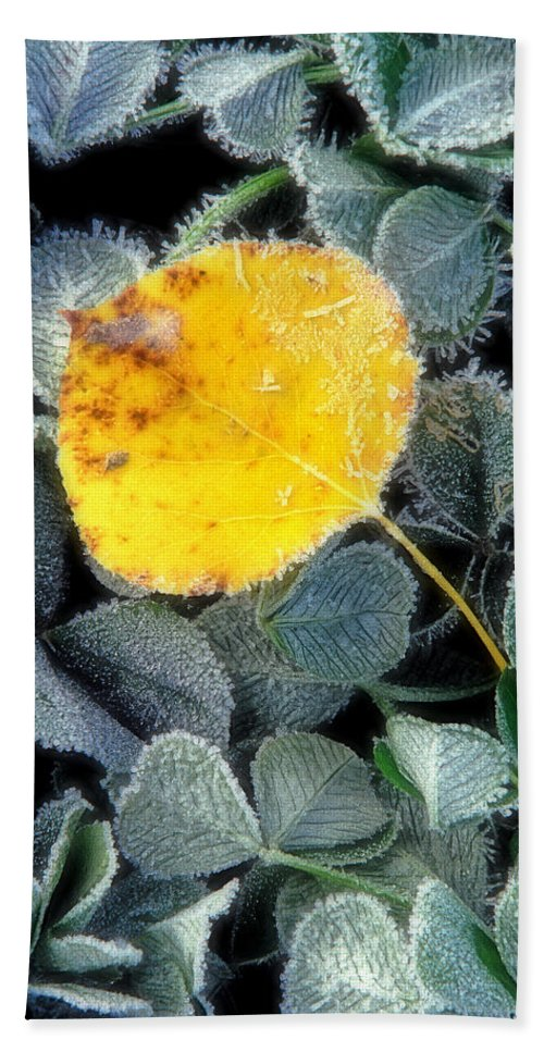First Frost Bath Sheet featuring the photograph Gold On Green by Bill Morgenstern