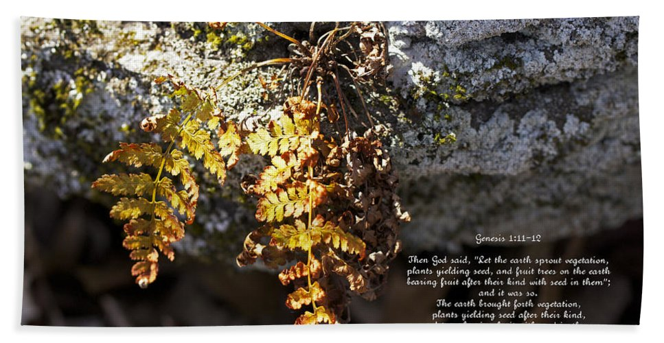 Fern Hand Towel featuring the photograph Golden Autumn Fern by Mother Nature