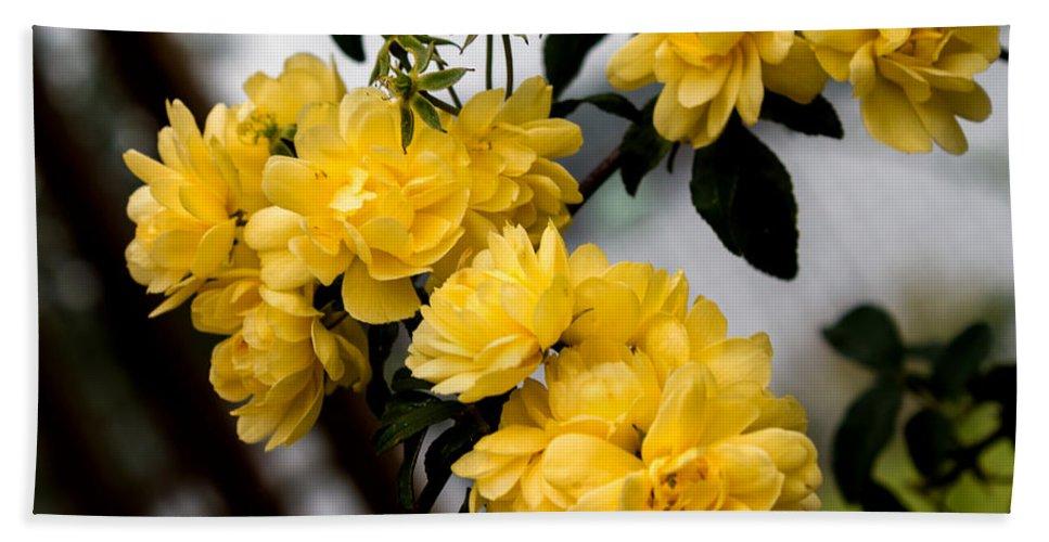 Flower Hand Towel featuring the photograph Golden Blooms One by Ken Frischkorn