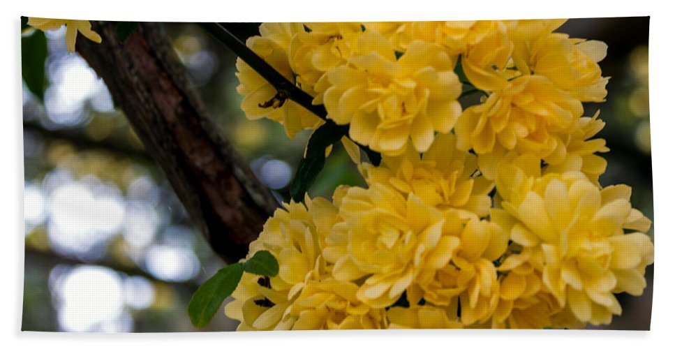 Flower Hand Towel featuring the photograph Golden Blooms Two by Ken Frischkorn