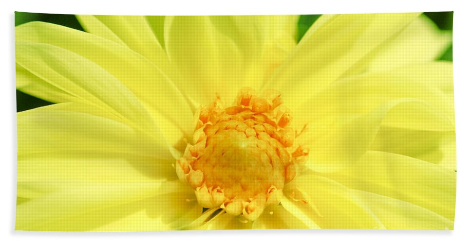 Golden Daisy Bath Towel featuring the photograph Golden Daisy by Optical Playground By MP Ray