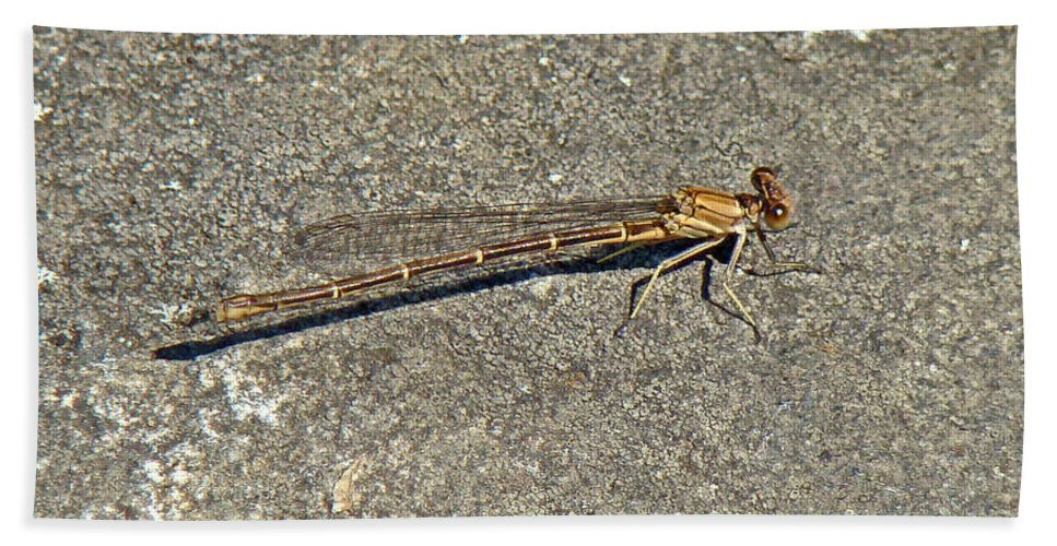 Golden Hand Towel featuring the photograph Golden Damselfly - Odonata - Suborder Zygoptera by Mother Nature