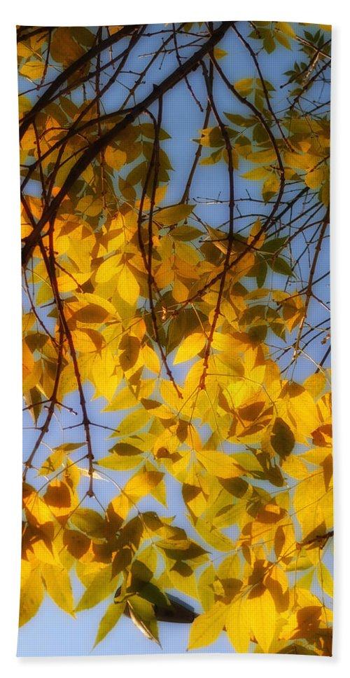 Fall Hand Towel featuring the photograph Golden Leaf Cascade by Joseph Hedaya