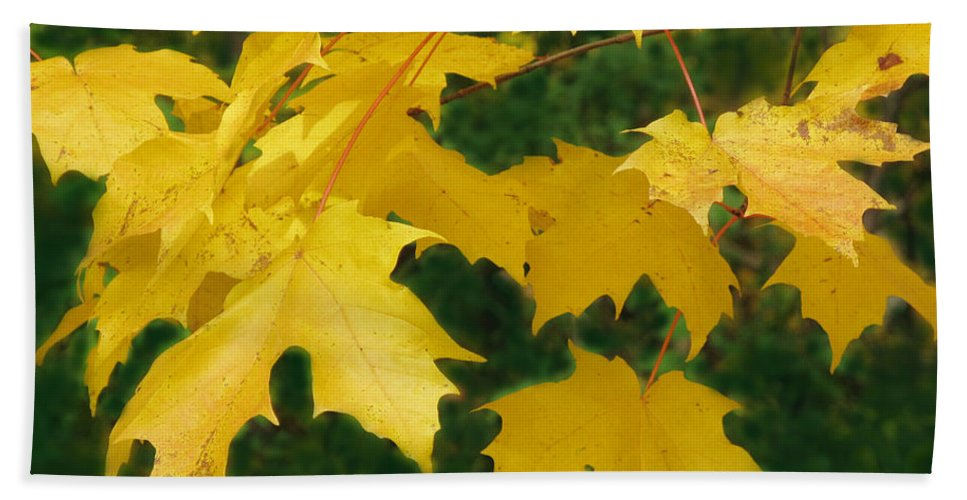 Fall Hand Towel featuring the photograph Golden Leaves Floating by Ian MacDonald