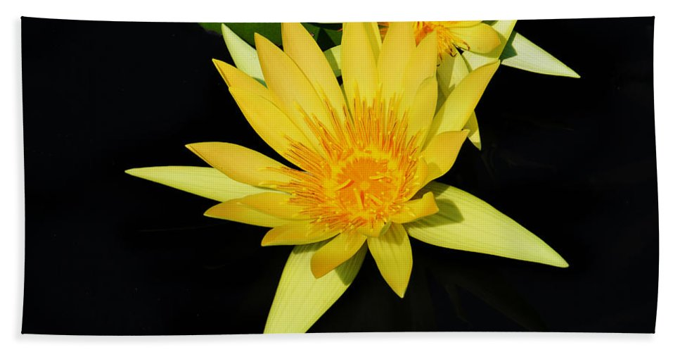 Lily Hand Towel featuring the photograph Golden Lily by Roger Becker