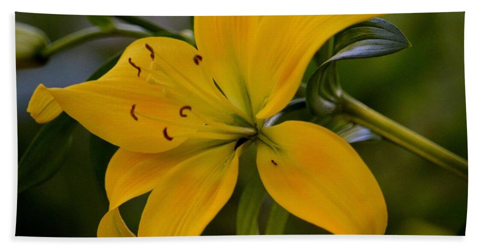 Golden Lily Sway Hand Towel featuring the photograph Golden Lily Sway 2013 by Maria Urso