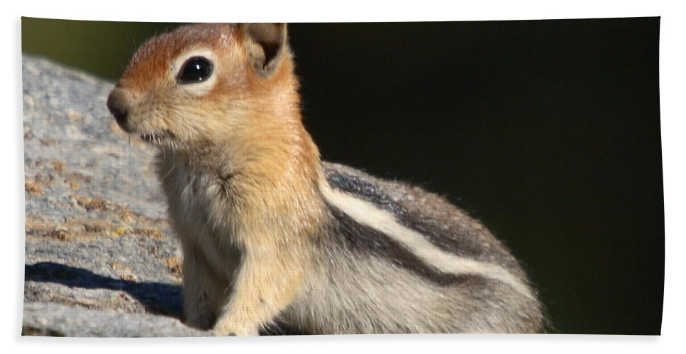 Nature Bath Sheet featuring the photograph Golden-mantled Ground Squirrel by David Salter