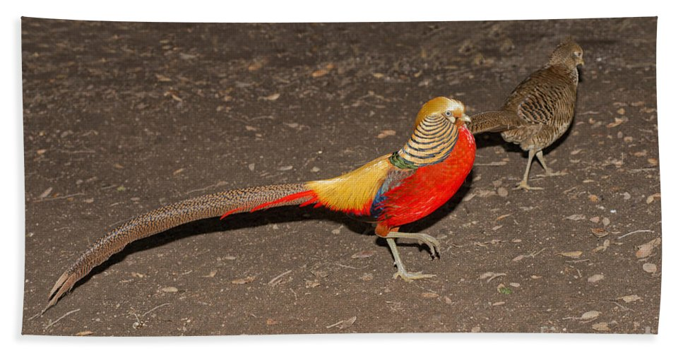 Animal Hand Towel featuring the photograph Golden Pheasant Pair by Anthony Mercieca