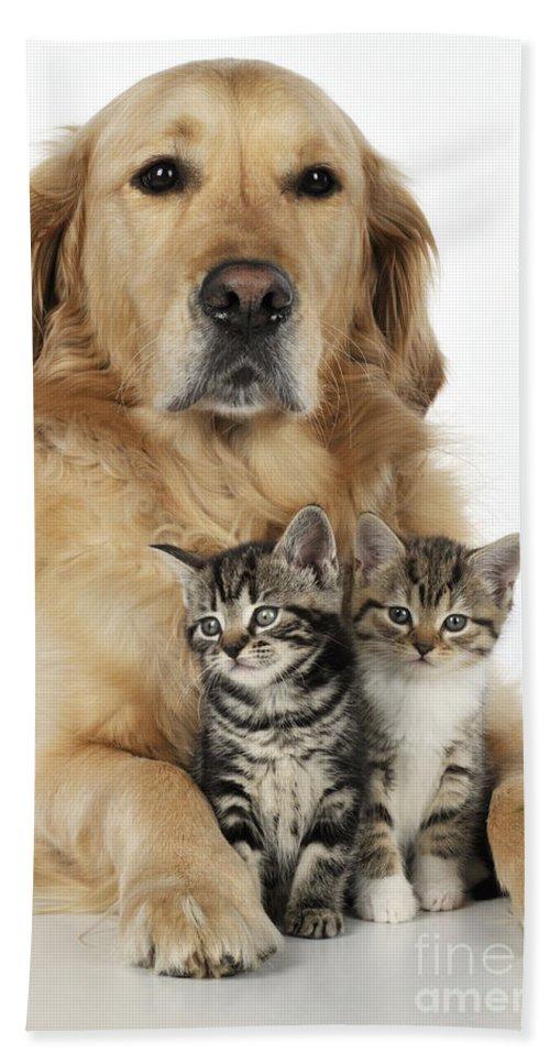 Cat Bath Sheet featuring the photograph Golden Retriever And Kittens by John Daniels