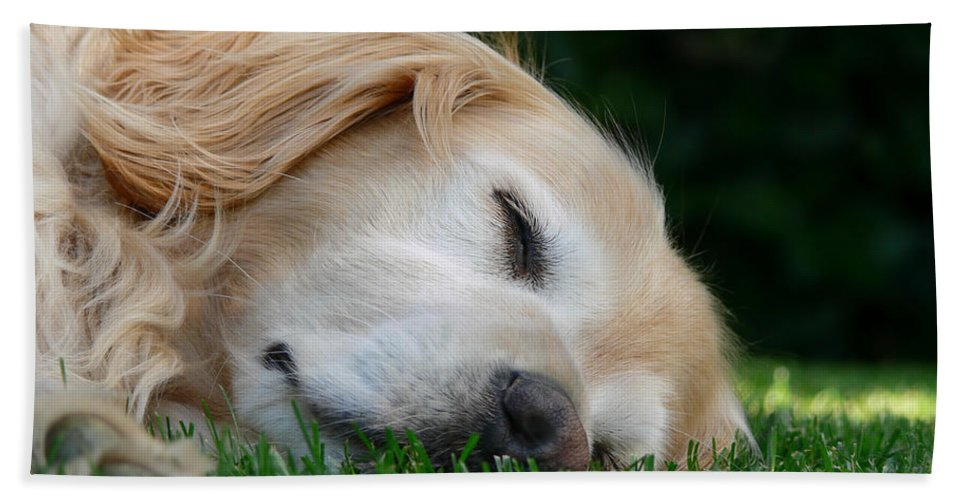 Golden Retriever Hand Towel featuring the photograph Golden Retriever Dog Sweet Dreams by Jennie Marie Schell