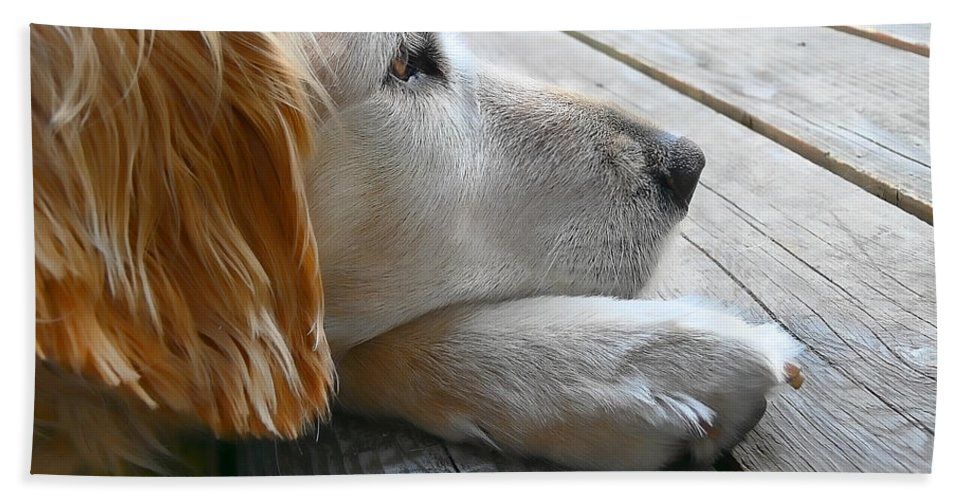 Golden Retriever Hand Towel featuring the photograph Golden Retriever Dog Waiting by Jennie Marie Schell