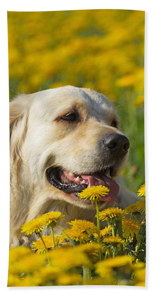 Dog Bath Sheet featuring the photograph Golden Retriever by Jaroslav Frank