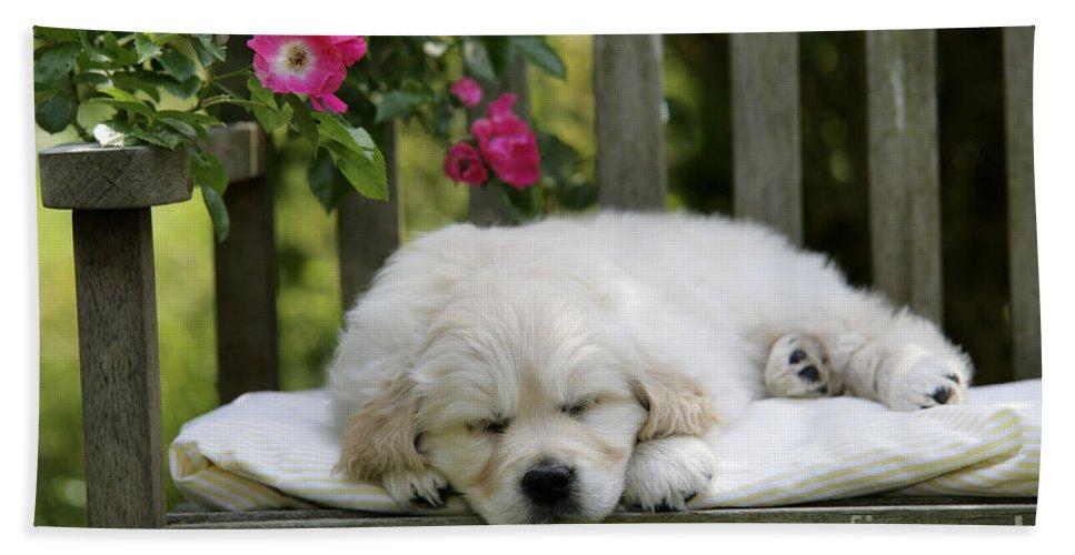 Golden Retriever Bath Sheet featuring the photograph Golden Retriever Puppy Sleeping by John Daniels