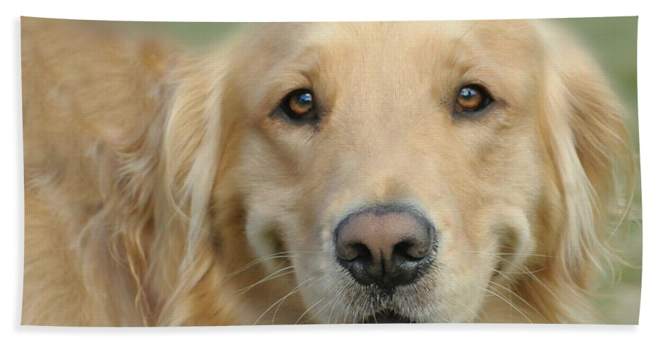 Dog Hand Towel featuring the photograph Golden Retriever Standard by Diana Angstadt