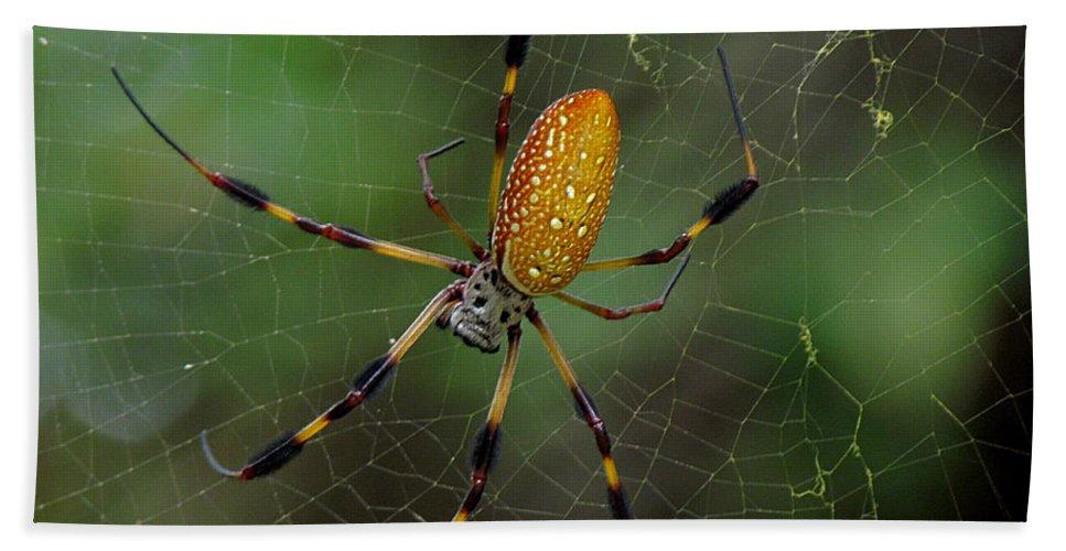 Golden Silk Spider Bath Sheet featuring the photograph Golden Silk Spider 10 by J M Farris Photography