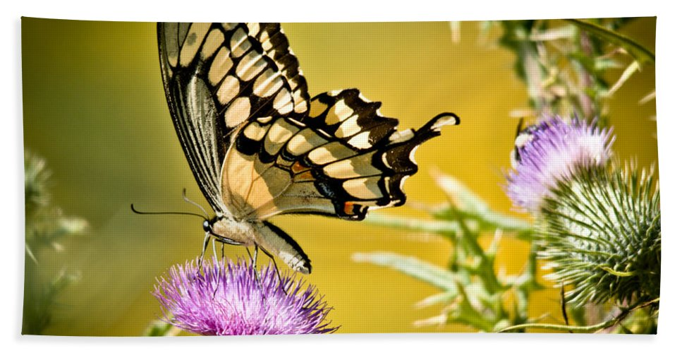 Hand Towel featuring the photograph Golden Swallowtail by Cheryl Baxter