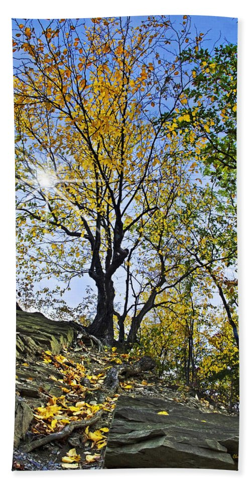 Fall Foliage Hand Towel featuring the photograph Golden Tree by Christina Rollo