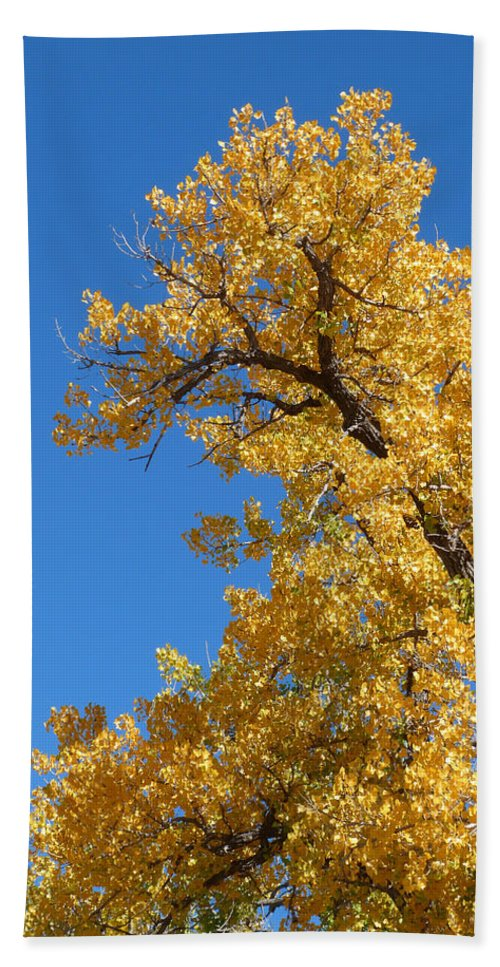 Nature Hand Towel featuring the photograph Golden Tree by Susan Porter