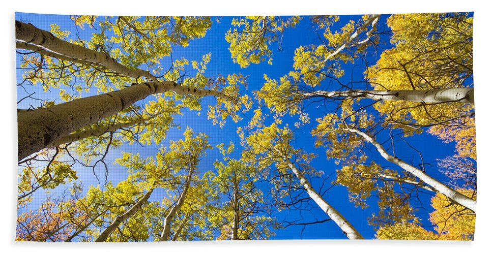 Snow Bath Sheet featuring the photograph Golden View Looking Up by James BO Insogna