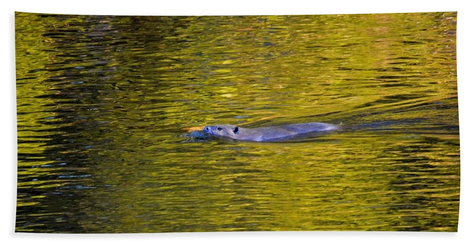 Beaver Hand Towel featuring the photograph Golden Waters by Thomas Phillips
