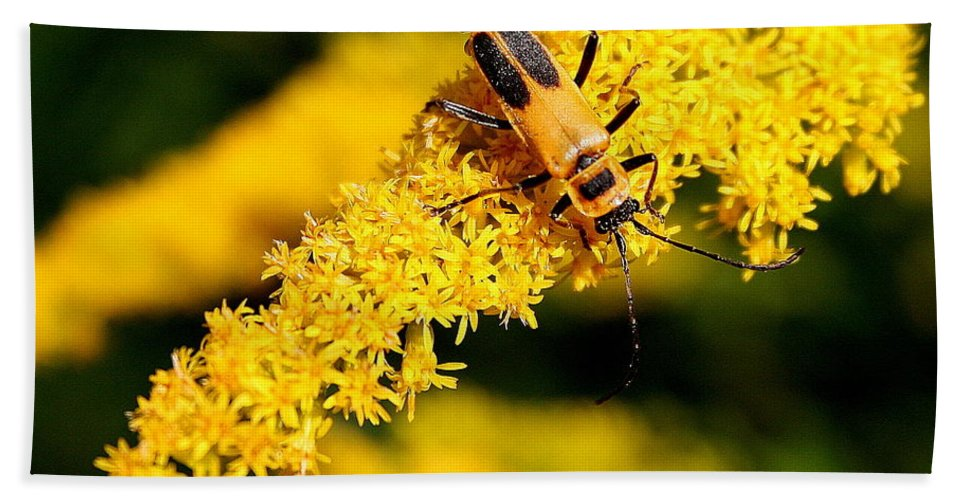 Chauliognathus Pensylvanicus Bath Sheet featuring the photograph Goldenrod Beetle by Laurel Talabere