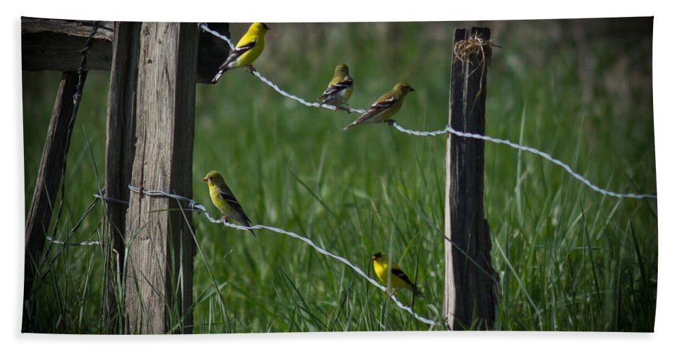Goldfinch Hand Towel featuring the photograph Goldfinch Gathering by Douglas Stucky