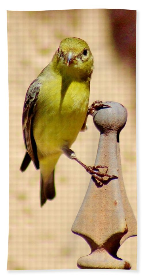 Bird Bath Sheet featuring the photograph Goldfinch Hanging On 031015ac by Edward Dobosh