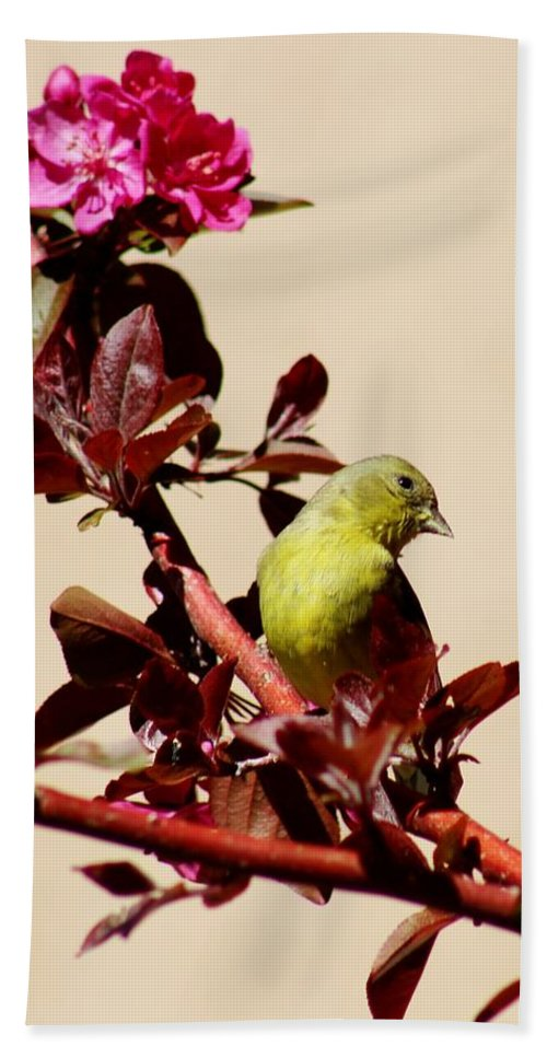 Wildlife Hand Towel featuring the photograph Goldfinch In Tree 031015a by Edward Dobosh
