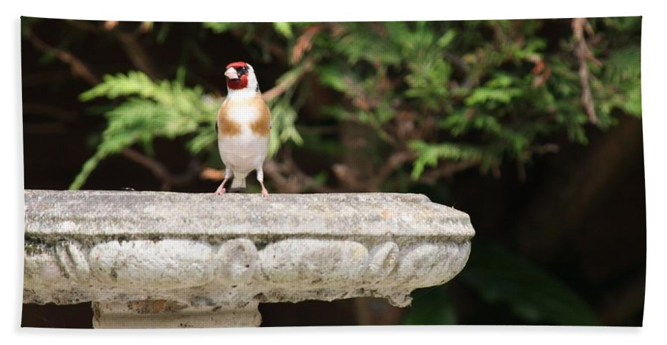 Goldfinch On Birdbath Bath Towel featuring the photograph Goldfinch On Birdbath by Gordon Auld